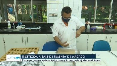 Photo of Pesquisadores desenvolvem inseticida orgânico à base de óleo essencial da pimenta-de-macaco