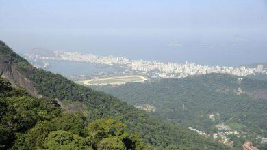 Photo of Petrobras refloresta área de Mata Atlântica no polo de gás de Itaboraí