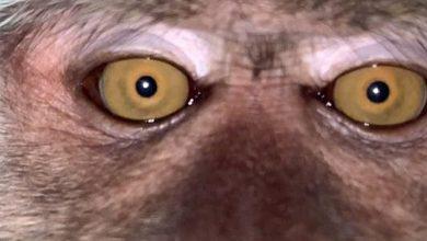 Photo of Macaco rouba celular e aproveita para tirar selfies